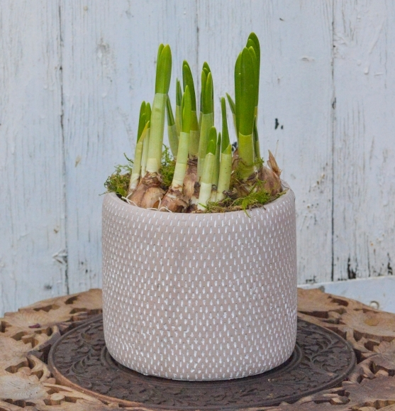 Tete a tete in rustic pot